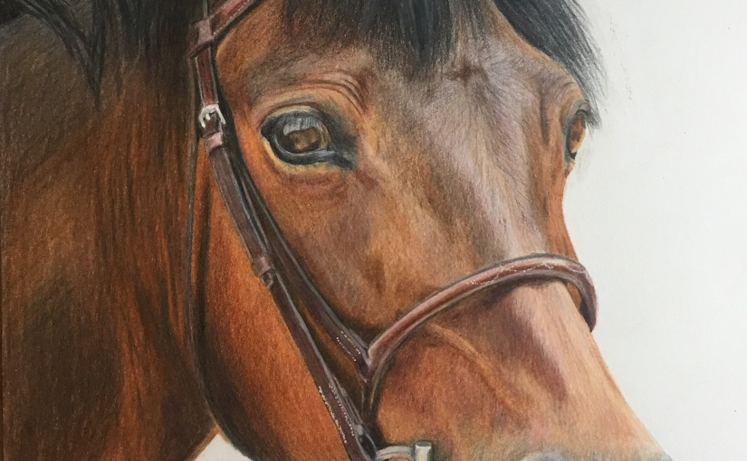 Nutmeg -Colored Pencil Portrait on SmoothPaper